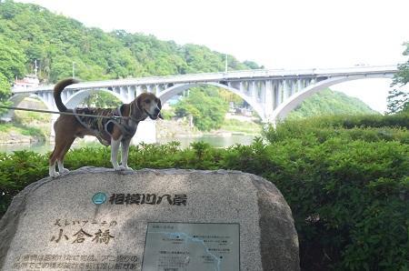 20150514相模湖八景 小倉橋09