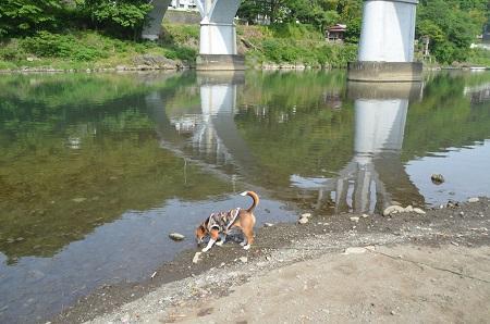 20150514相模湖八景 小倉橋19