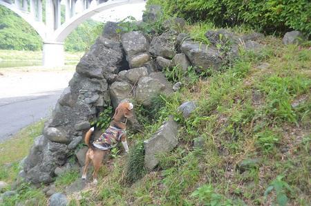 20150514相模湖八景 小倉橋16