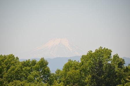 20150513野山北・六道山公17