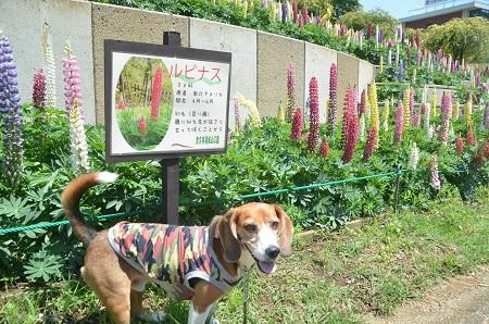 20150514津久井湖城山公園水の苑地03