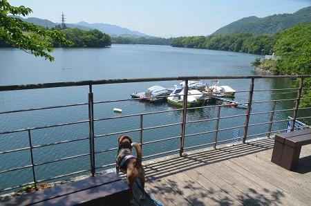 20150514津久井湖城山公園水の苑地08