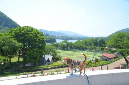 20150514津久井湖城山公園水の苑地17