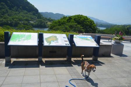 20150514津久井湖城山公園水の苑地18