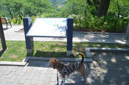 20150514津久井湖城山公園水の苑地15