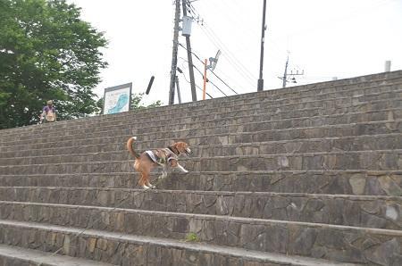 20150514相模湖八景 水郷田名04