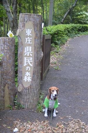 20150523東庄県民の森05