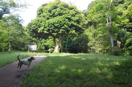 20150523東庄県民の森11