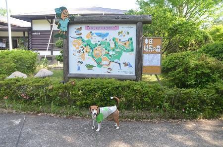20150523東庄県民の森07