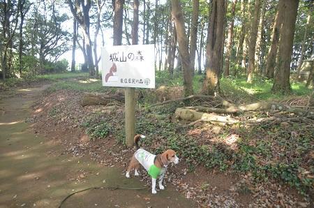 20150523東庄県民の森23