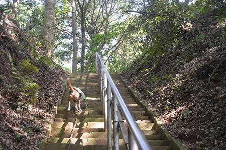 20150523東庄県民の森21