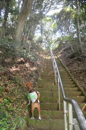 20150523東庄県民の森20