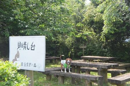 20150523東庄県民の森33