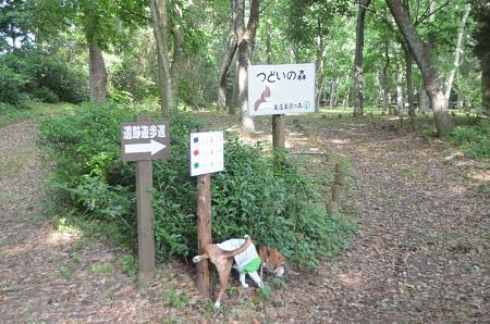 20150523東庄県民の森31