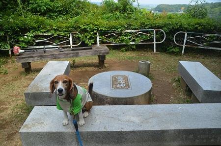 20150523雲井岬つつじ公園05