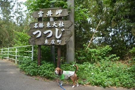 20150523雲井岬つつじ公園11