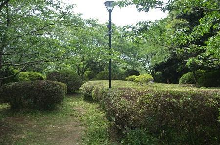 20150523雲井岬つつじ公園09