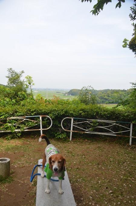 20150523雲井岬つつじ公園08