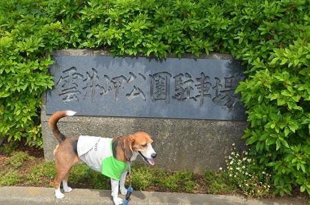 20150523雲井岬つつじ公園24
