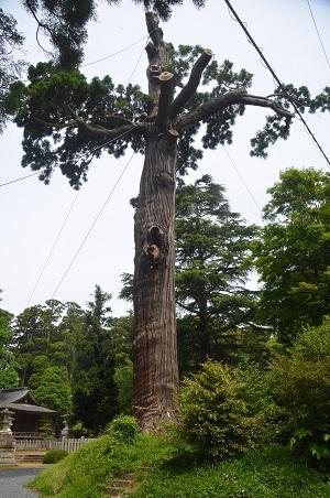 20150523雲井岬つつじ公園23