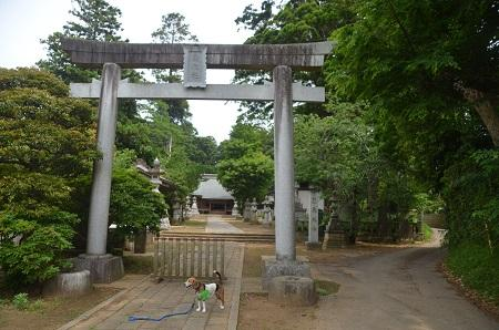 20150523雲井岬つつじ公園21
