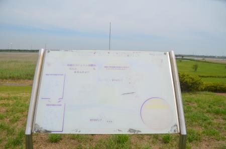 20150523利根川コジュリン公園06