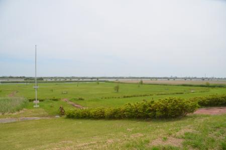 20150523利根川コジュリン公園07