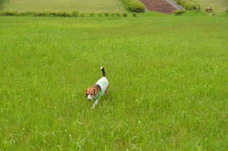 20150523利根川コジュリン公園18