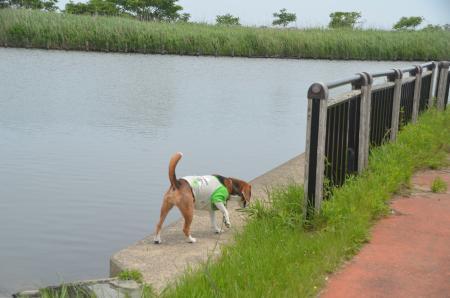 20150523利根川コジュリン公園19
