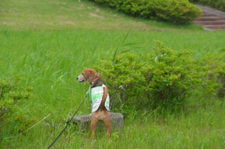 20150523利根川コジュリン公園27