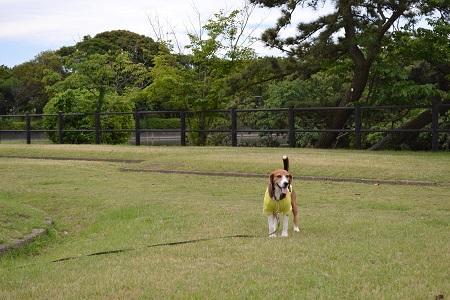 20150605富津公園11