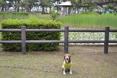 20150605富津公園34