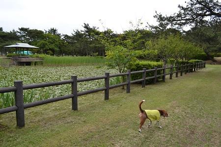 20150605富津公園33