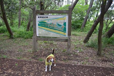 20150605富津公園31