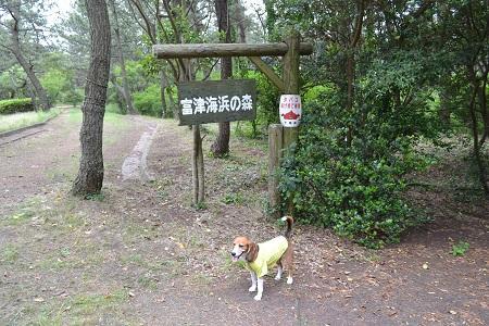 20150605富津公園32