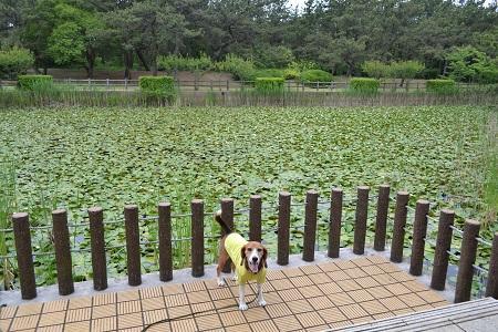 20150605富津公園38