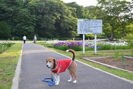 20150610佐倉城址公園10