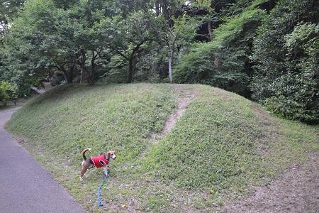 20150610佐倉城址公園22