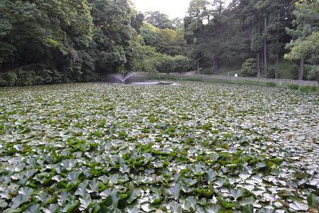20150610佐倉城址公園20