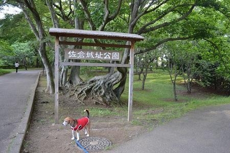 20150610佐倉城址公園26