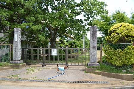 20150611菱田小学校01