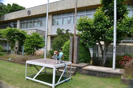 20150611菱田小学校18