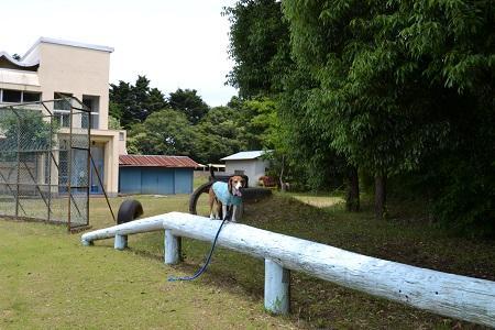 20150611菱田小学校21