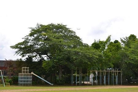 20150611菱田小学校29