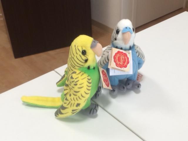 とりきちさん20150517-2
