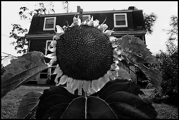 Sunflower-blognew.jpg