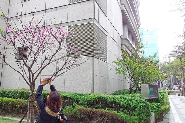 桜とメジロ(2)