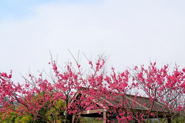 晴れのち霧(2)