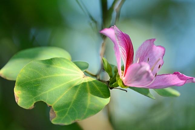 木陰に咲く(3)
