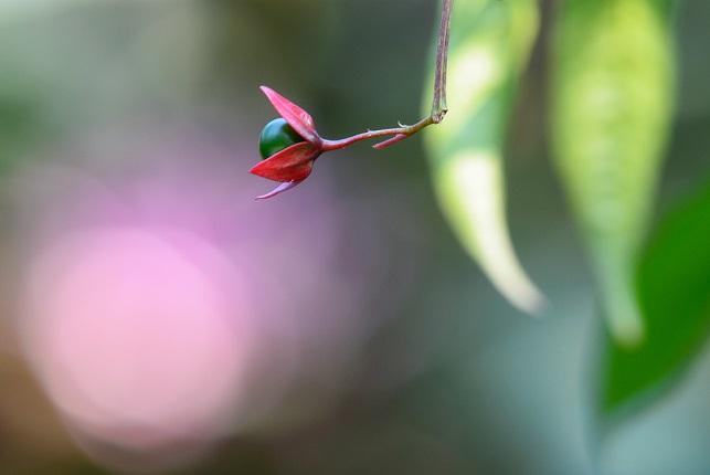 木陰に咲く(2)